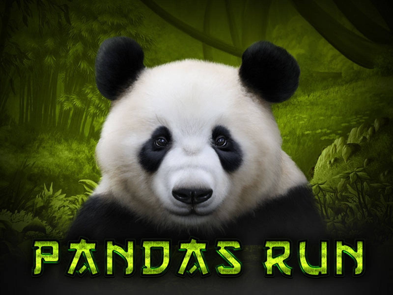 The Panda's Run Online Slot Demo Game by Tom Horn Gaming